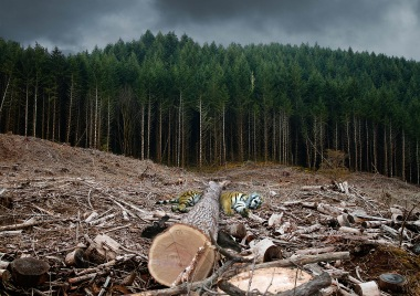 Biodiversity_Destroyed